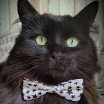 cat-niss
