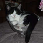 pussycat57