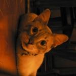 joey-le-miaou