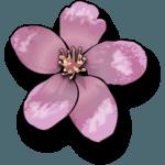 tulipe345