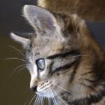 Avatar de Catoine15
