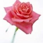 rosefe