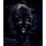amadeus-wolf