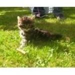 kitty60150