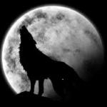 wolfyus