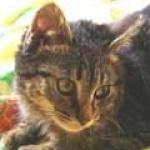 catandcat