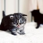 kitty6692