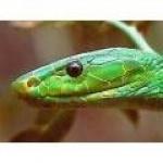 le-mamba-vert