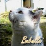bubulle84