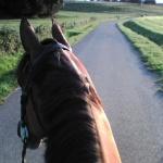 i-love-equitation