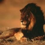 lion2207