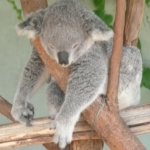 koala222
