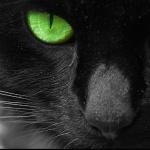 melycat