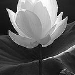 bouddha1505