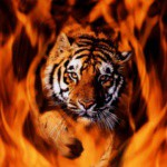flamme3