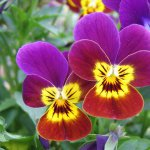 juliette-flora