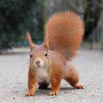 ecureuil-du-bois-joli