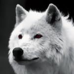 Avatar de Le Loup Blanc
