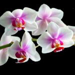 fleur2lareunion