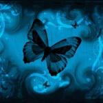 papillon_sous_le_ciel