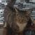 lovecats67