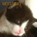 clochinna