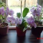 orchidee1005