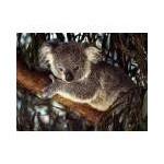 koala2111
