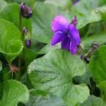 violetta49