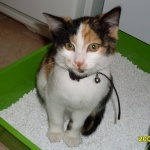 my-little-cat