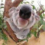 koala0806