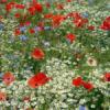 fleurdeschamps78324