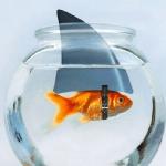 Avatar de Goldenfish