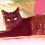 mouks-cat