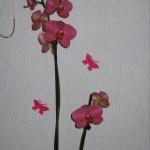 orchidee974