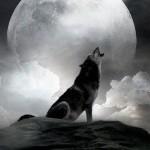 dark-luna
