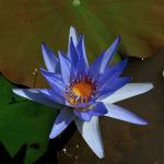 lotus1965
