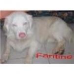 fantine32