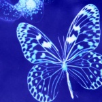 petit-papillon93
