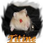 i-love-hamster-xooit-fr
