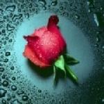 rosered33