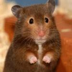 hamsterlove711