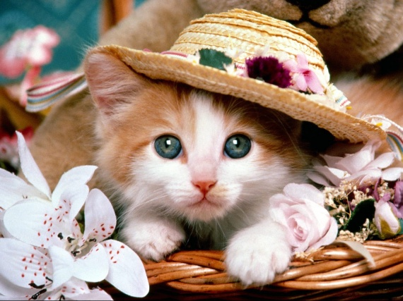 kitten_in_a_hat-1303