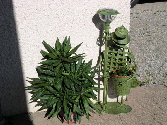 Grenouille et plante verte 08 la maison au fil des ans for Plante verte maison