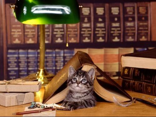 chat travailleur1