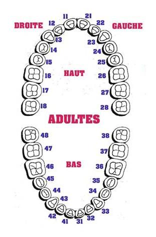 invisalign-dents-img