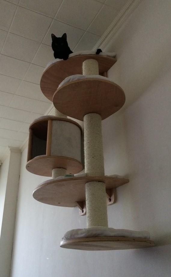 Un nouvel arbre chat pour mon tigre de salon chats forum animaux - Le bon coin arbre a chat ...