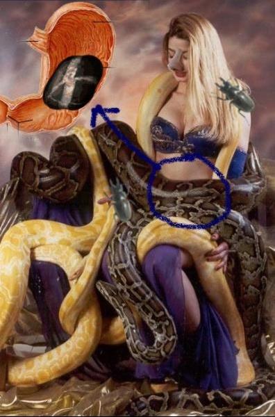 serpentsgroupe