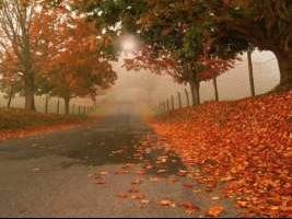 'automne