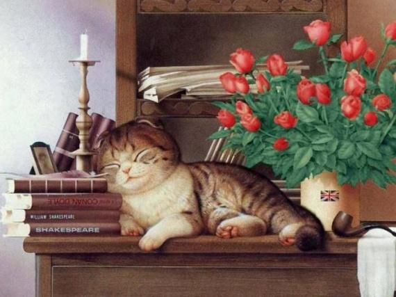 chat qui dort sur meuble